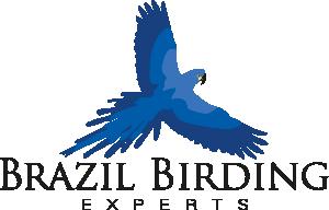 Brazil Birding Experts